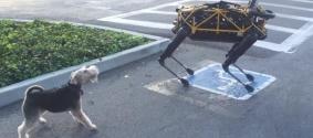 Встречу робота-собаки и живого пса сняли на видео