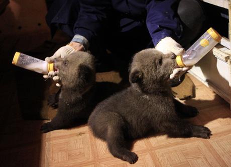 фото новорождённых медвежат