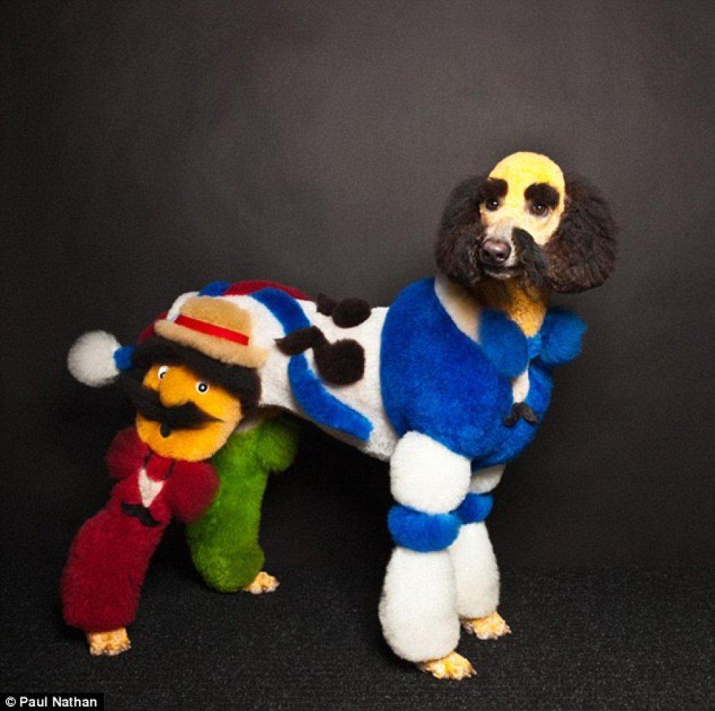 Картинки по запросу Необычные стрижки и покраска собак: