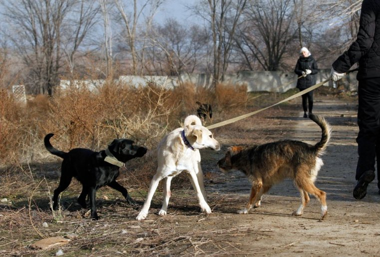 Собак, конечно, разбирают, но далеко не всех и не сразу.