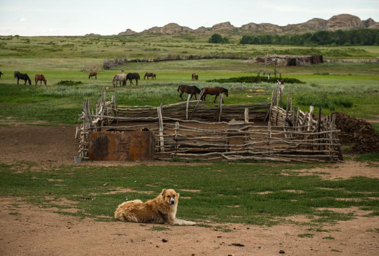 На следующий день гость из Ирландии останавливается на фермах, расположенных на просторах Сарыарки.