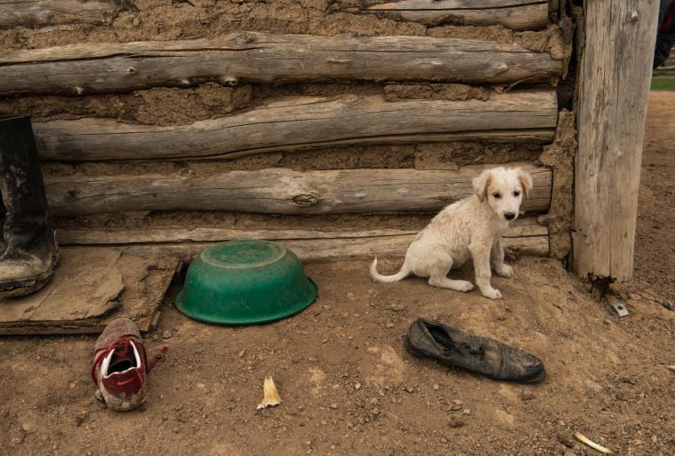 Щенок как всегда и везде, играет с тапочками во дворе, потом ищи где твоя вторая пара обуви...