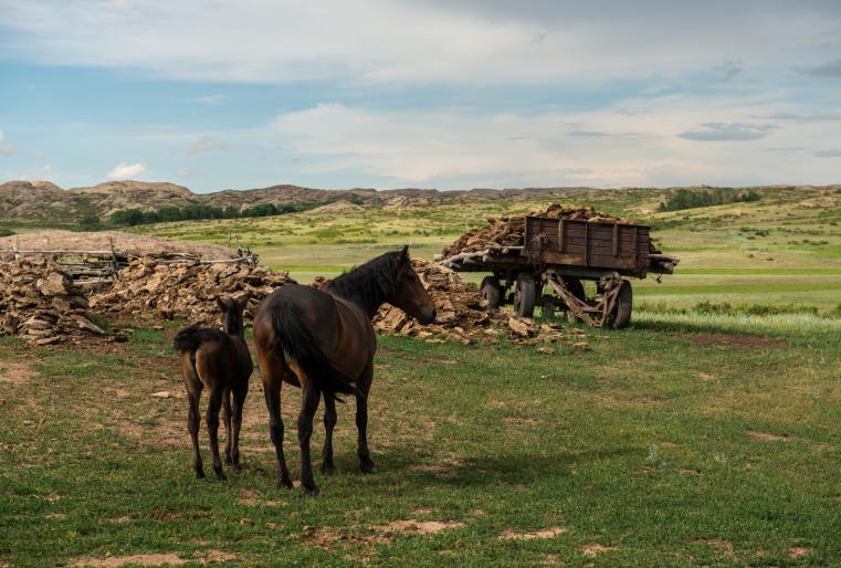 """""""Задача моего проекта - ответить на вопрос: куда же на самом деле мы все движемся? Куда движутся местные жители, как нация, как вид? Меня интересует, что такое казахская степь, кто такие ее жители?"""", - рассказывает фотограф."""