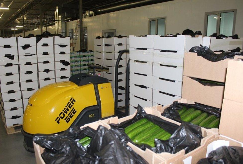 Объект ориентирован на годовое производство 3 200 тонн томатов и 4 000 тонн огурцов.