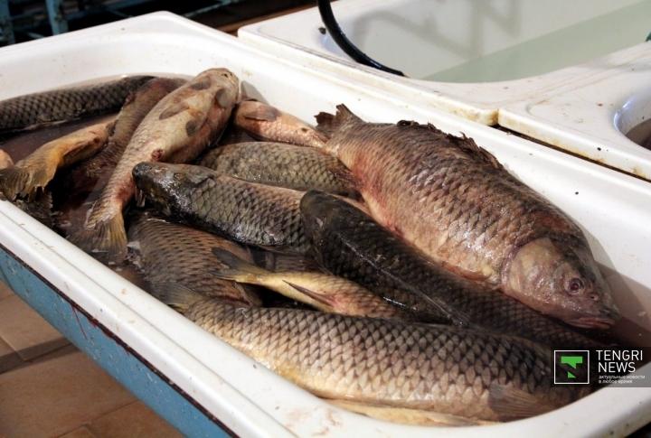 Работа в рыбном цеху считается одной из самых сложных на территории колонии.  Здесь трудятся 17 человек...