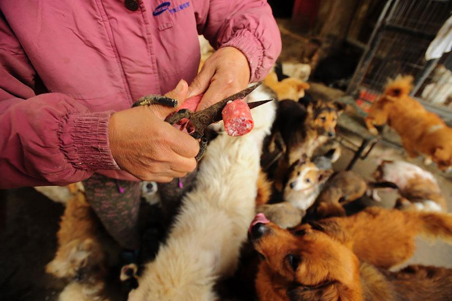 Быстрые стволы в китае едят собак  i kina spiser de