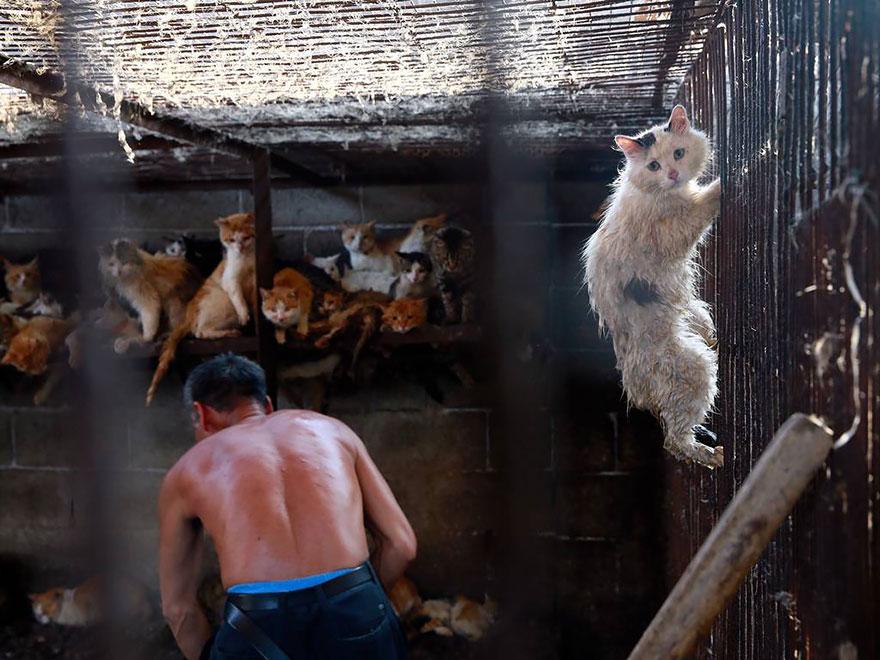 Почему китайцы ели собак  rei red
