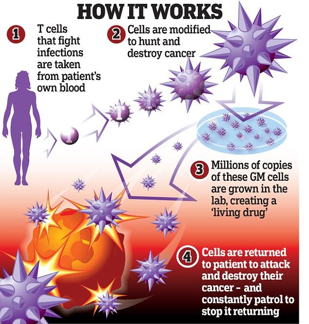 Как работает клетки человека - 8