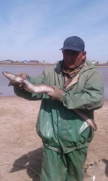 Диковинную рыбу выловили в реке Жайык