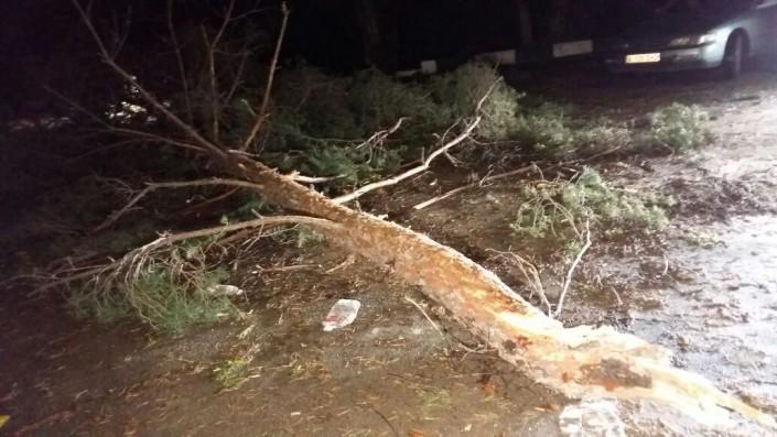 Упавшие во время дождя в Алматы деревья повредили 2 авто и погрузчик
