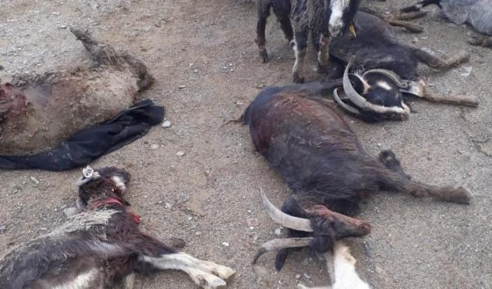 Мангистауская область: Град убил скот в селе Уштаган (ВИДЕО)