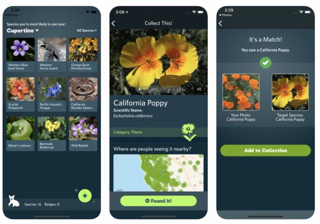 Появилось приложение, распознающее растения иживотных по фото