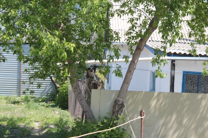 Смотреть видео скрытая камера в окнах домов