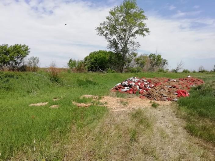 Десятки тонн картофеля гниют близ Костаная