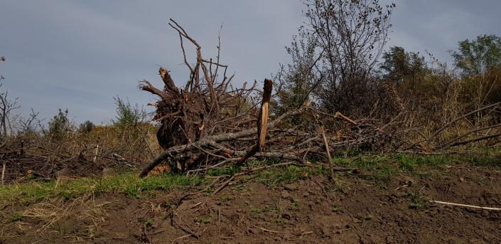 Уничтожение яблоневого сада может стать причиной селя - эксперт
