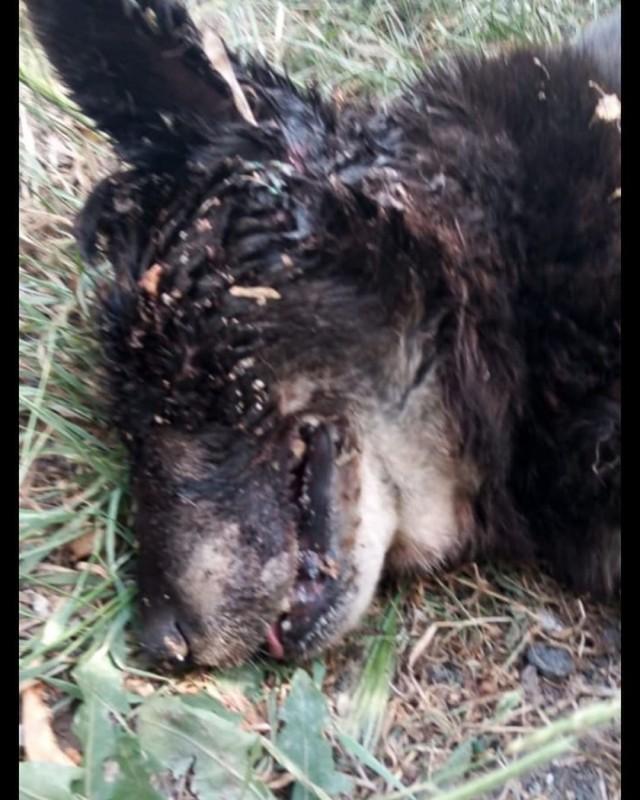 Живодеры бросили пса умирать на свалке Нур-Султана