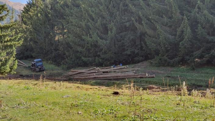 В Бутаковском ущелье в Алматы вырублено более 2 000 деревьев
