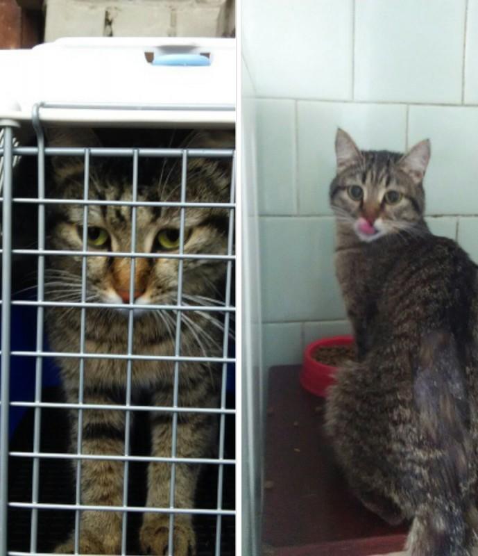 Просидевшую на дереве неделю кошку спасли в Усть-Каменогорске