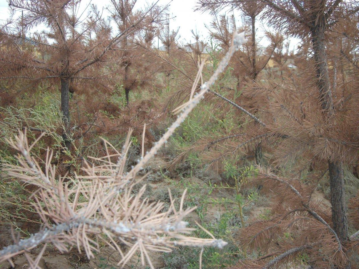Миллионы тенге закопали в актюбинскую землю