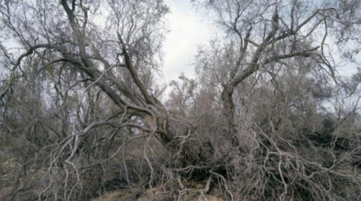 Сексаул лесные нарушители