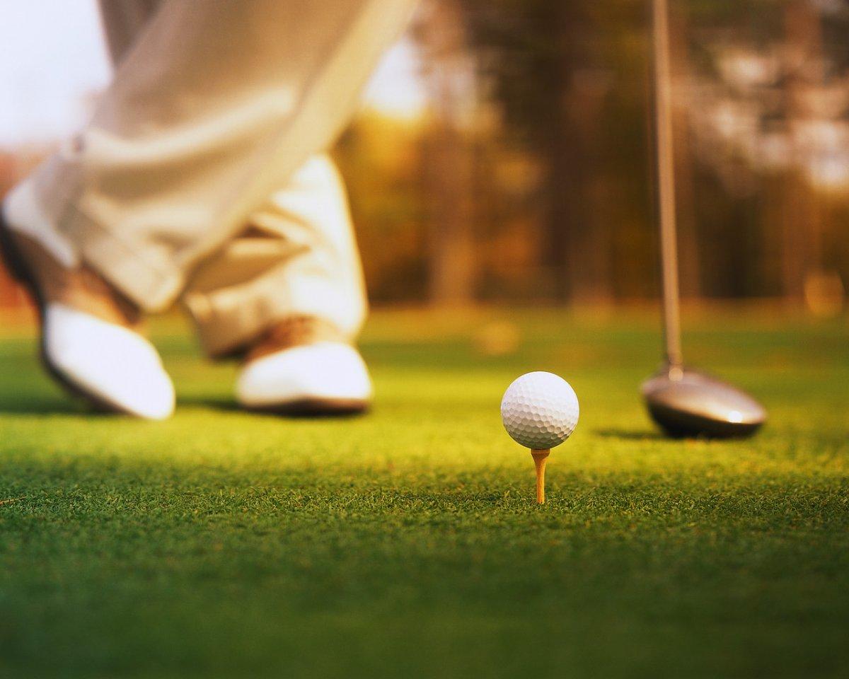 Картинки по запросу Черепахам нравятся некоторые поля для гольфа