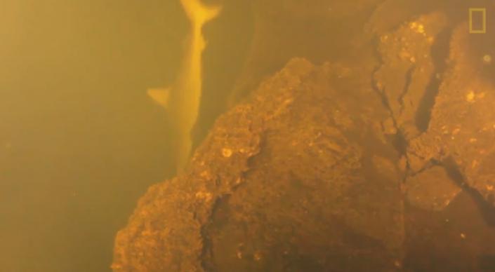 Ученые обнаружили в жерле действующего вулкана живых акул