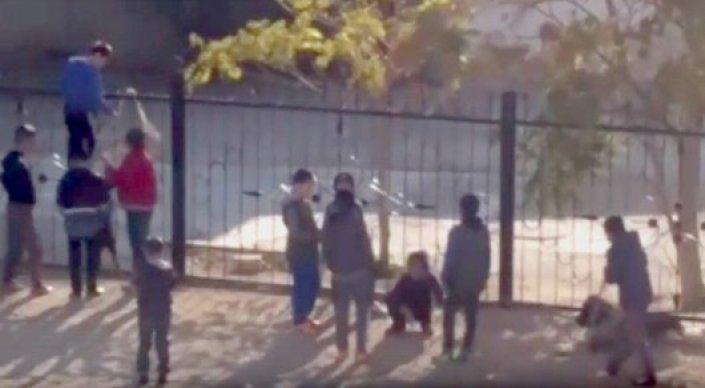Дело об издевательстве над кроликом в Актау закрыли