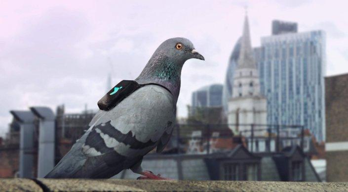 Лондонские голуби сообщают о качестве воздуха через Twitter