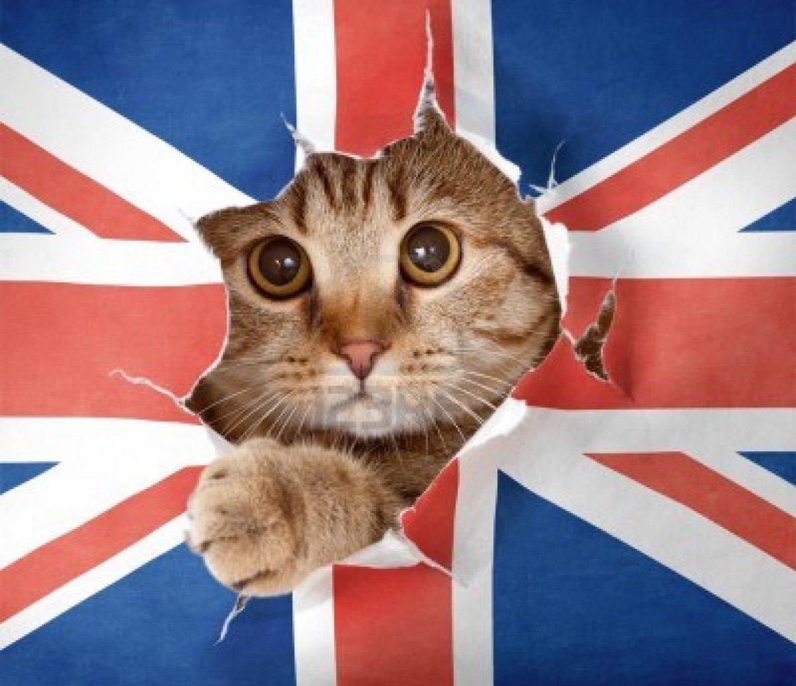 Картинки по запросу Главного кота Британии