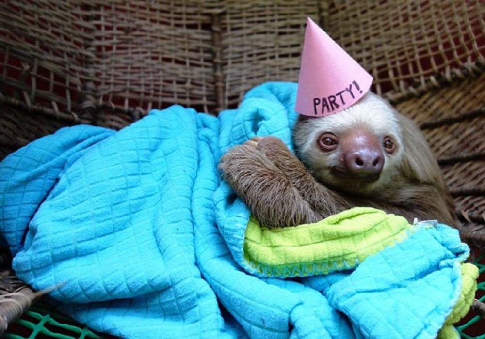 Animals 40 Cute Animals Celebrating Their Birthdays  Ranker