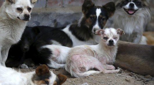 64% китайцев выступают зазапрет «фестиваля собачьего мяса» вЮйлине