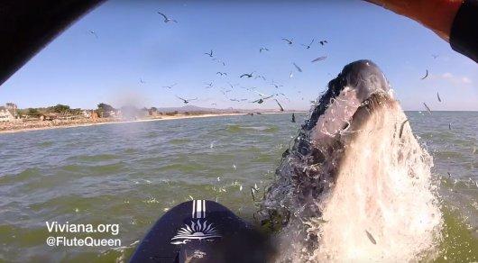 Калифорнийский серфер сняла на видео встречу с китом