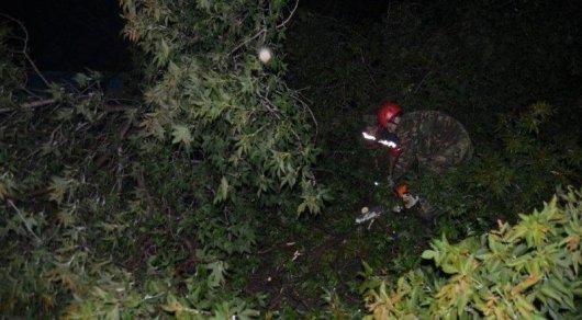 Разгул стихии в ВКО: Повалены деревья и подтоплены частные дома