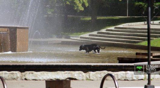 Вближайшие дни наюге изападе Казахстана предполагается сильная жара
