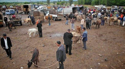 Уехавшие торговать скот трое братьев найдены мертвыми вАлматинской области
