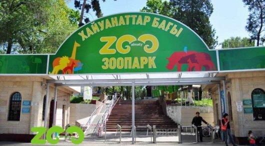 Валматинском зоопарке умер единственный гепард