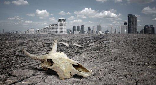 WWF: Запоследние 40 лет количество животных вмире уменьшилось на60%