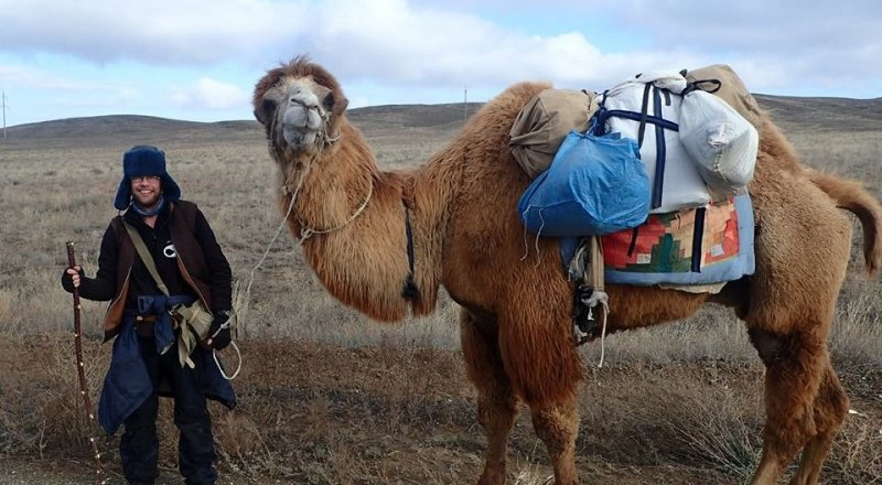 Верблюд убил пастуха под Омском - СИБ.ФМ | 440x800