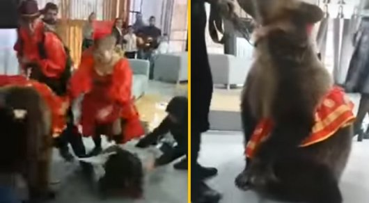 Насъемках русского канала медведица напала надевушку