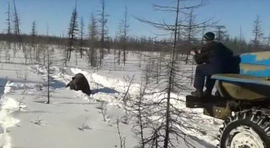 Установлены личности подозреваемых в страшной расправе над медведем вЯкутии
