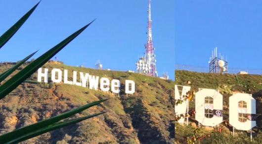 ВСША любитель марихуаны испортил популярную надпись Hollywood