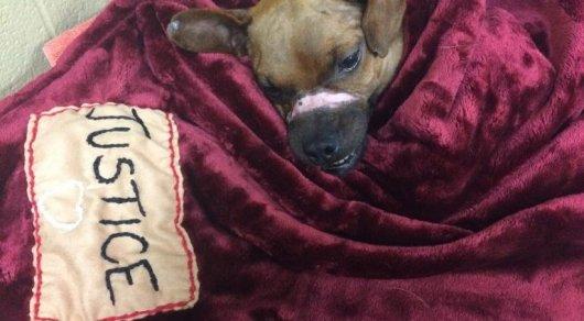 Американец получил 5 лет тюрьмы за жестокое обращение с собакой