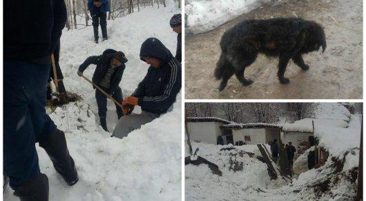 Собаку нашли живой спустя 44 дня после того, как ее накрыла снежная лавина