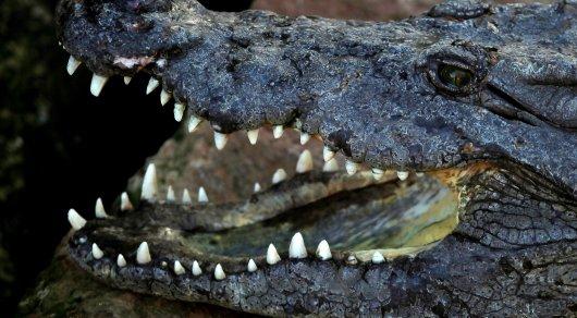 Останки пропавшего охотника нашли в телах крокодилов в Зимбабве