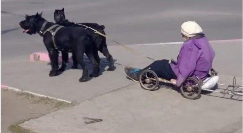 Пожилая женщина из Рудного передвигается по городу на собачьих упряжках