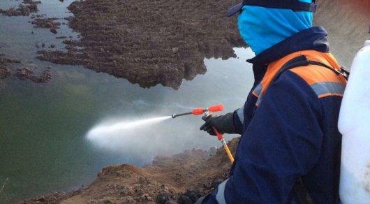 Как уничтожают комаров на левобережье Астаны