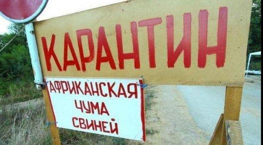 Африканской чумы свиней в Казахстане нет - Минсельхоз