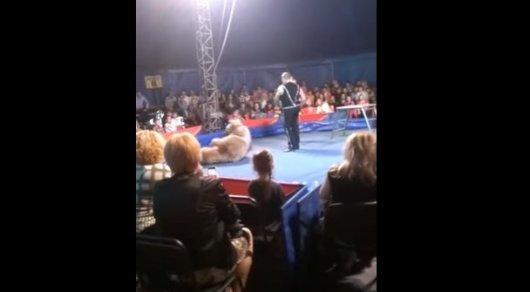 Медведь набросился на посетителей цирка в Киеве