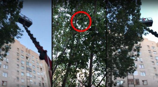 Котенка, просидевшего на дереве шесть суток, сняли при помощи автовышки
