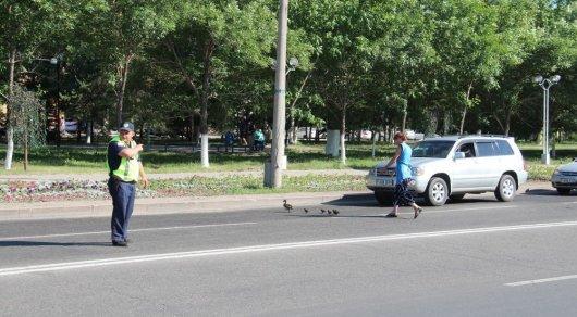 Полицейский перекрыл движение ради уток в Усть-Каменогорске